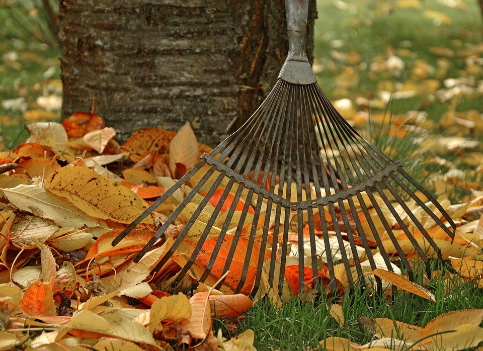 rake and leaves photos